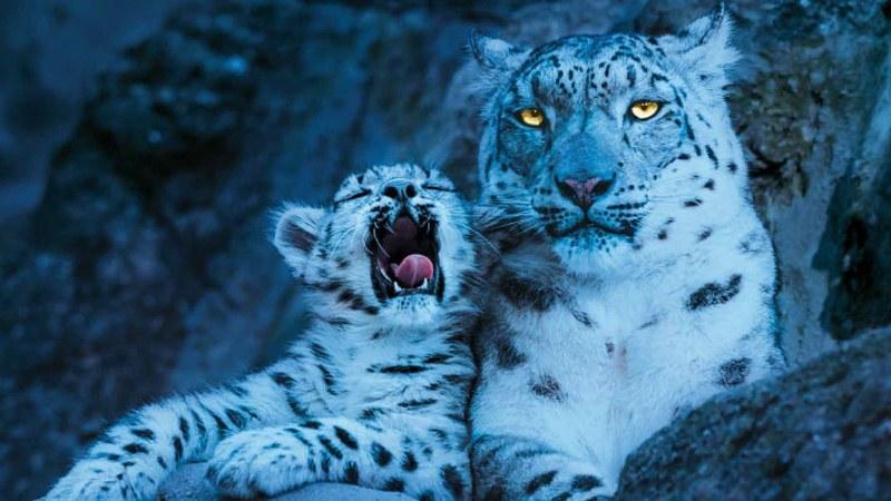 Gewinnen Sie Tickets für die Zoo-Nacht